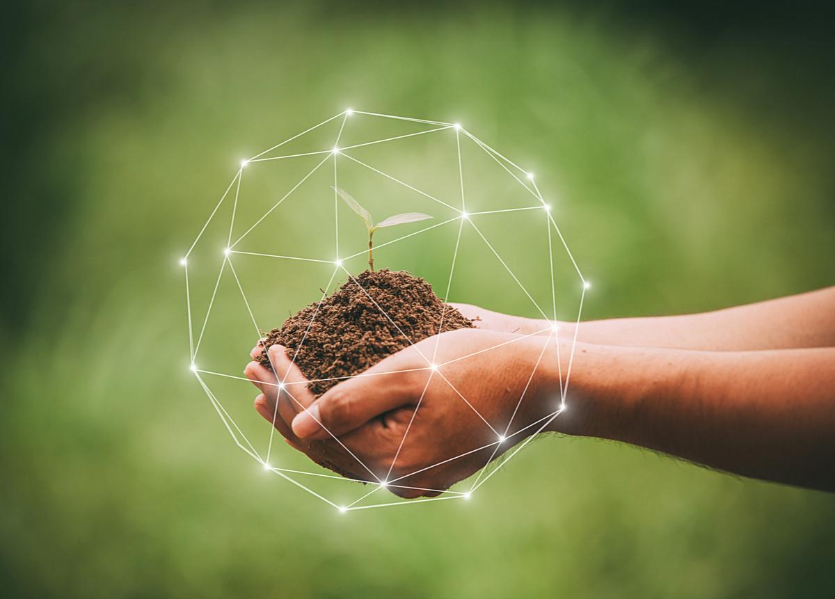 Sostenibilidad y Sustentabilidad: Claves para entender estos conceptos